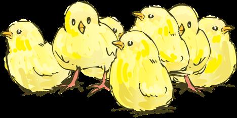 chicks-2141568__340