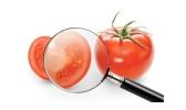 TomatoMagnifyingGlass360x215