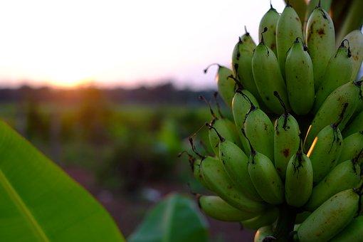 banana-2411086__340