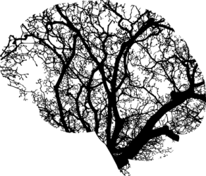 brain-2146817__340